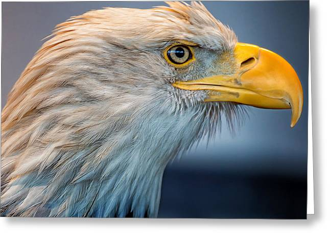 Haliaeetus Leucocephalus Greeting Cards - Eagle With An Attitude Greeting Card by Bill Tiepelman