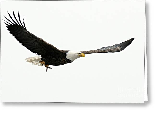 Lhr Images Greeting Cards - Eagle with Fish Greeting Card by Larry Ricker