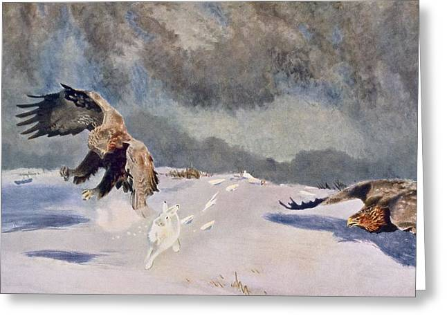 Hunting Bird Drawings Greeting Cards - Eagles And Rabbit, 1922 Greeting Card by Bruno Andreas Liljefors