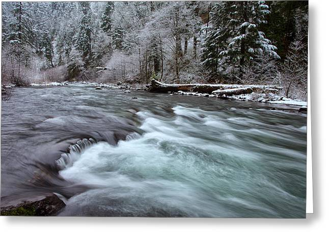 Eagle Creek Greeting Cards - Eagles Winter Greeting Card by Darren  White