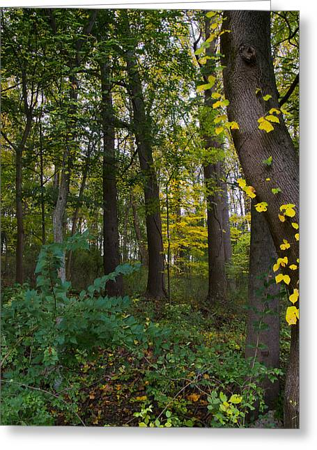 Early Autumn Greeting Cards - Early Autumn Greeting Card by Bill Cannon