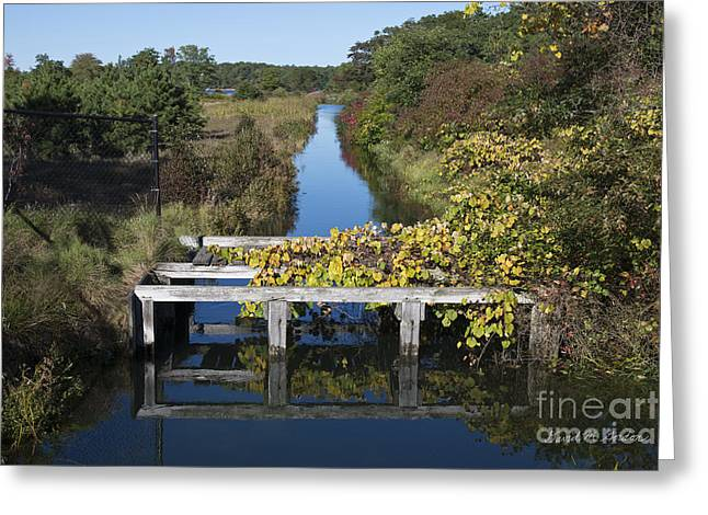 Chromatic Photographs Greeting Cards - Early Autumn Colors I Greeting Card by David Gordon