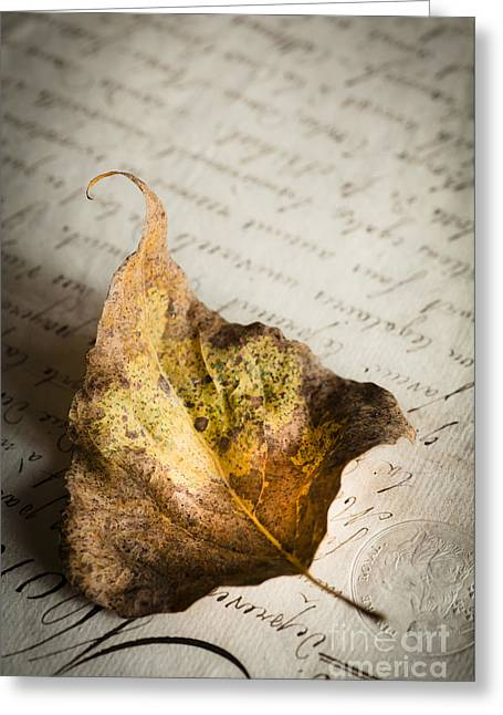 Script Greeting Cards - Early Autumn Greeting Card by Jan Bickerton
