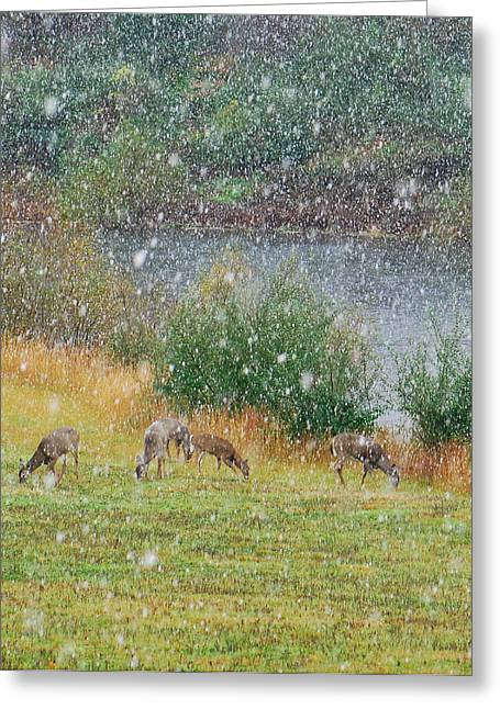 Grazing Snow Greeting Cards - Early Autumn Snow Greeting Card by Amy Porter