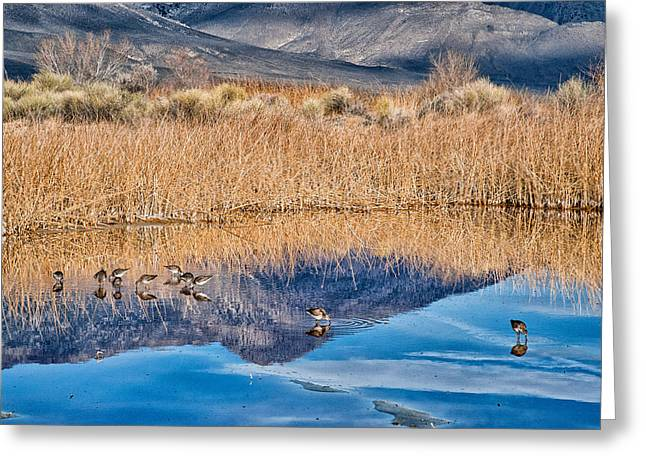 Water Fowl Photographs Greeting Cards - Early Bird Gets the Worm Greeting Card by Cat Connor