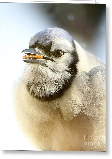 Blue Jay Picture Greeting Cards - Early Bird Gets The Worm Greeting Card by Tina  LeCour