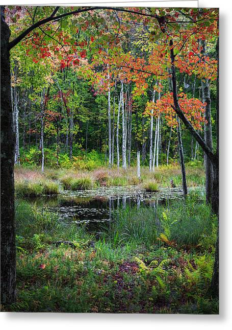 The Swamp Greeting Cards - Early Color Greeting Card by Bill  Wakeley