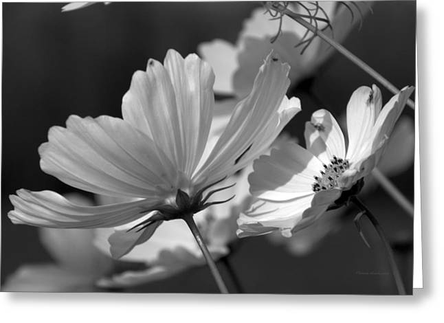 Pinks And Purple Petals Digital Art Greeting Cards - Early Dawns Light On Fall Flowers BW 02 Greeting Card by Thomas Woolworth