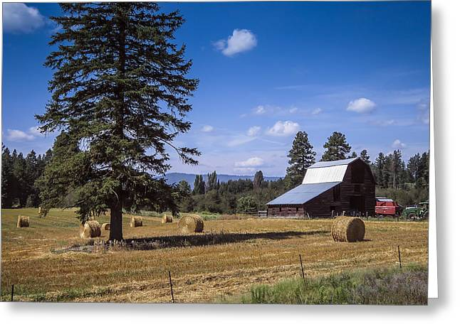 Farmers Field Greeting Cards - Early Harvest Greeting Card by Daniel Hagerman