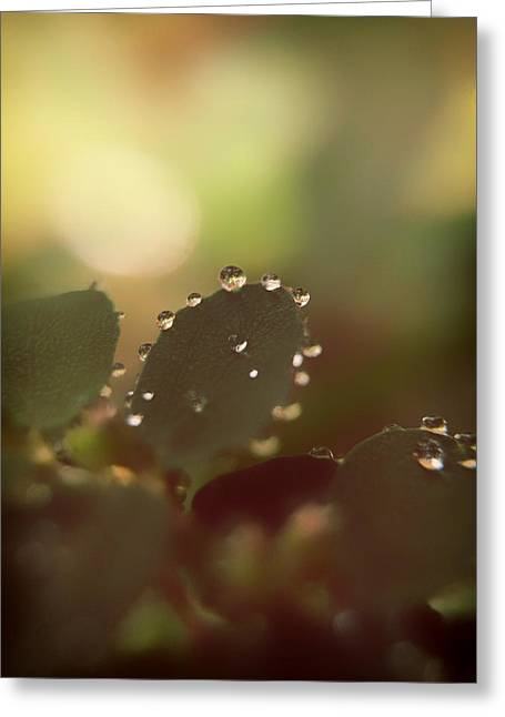 Ground Level Greeting Cards - Early Light Greeting Card by Mountain Dreams