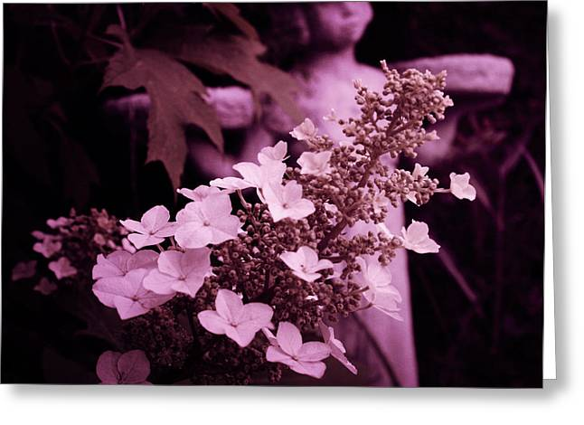 Flowering Bush Greeting Cards - Early morn Midnight in the garden of good and evil Greeting Card by Toni Hopper