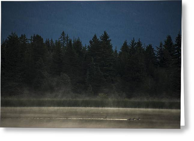 Ducks Lakes Greeting Cards - Early Morning Greeting Card by Aaron S Bedell
