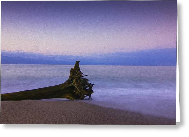 Driftwood Beach Greeting Cards - Early Morning Greeting Card by Aged Pixel