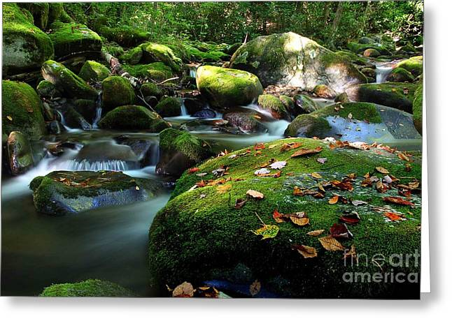 Flowing Stream Greeting Cards - Early Morning Along The Stream Greeting Card by Michael Eingle