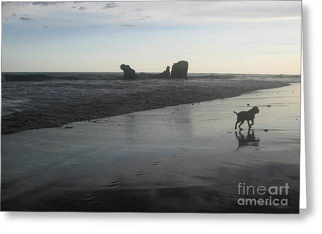 El Salvador Greeting Cards - Early Morning Beach Stroll Greeting Card by Stav Stavit Zagron