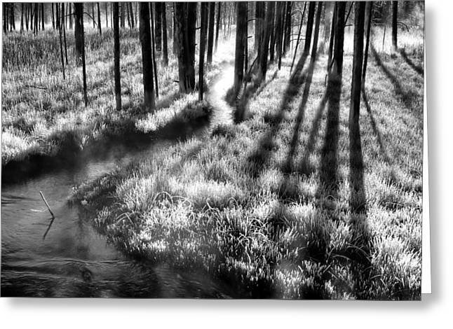 Yellowstone National Park Greeting Cards - Early Morning Chill Greeting Card by Mark Kiver