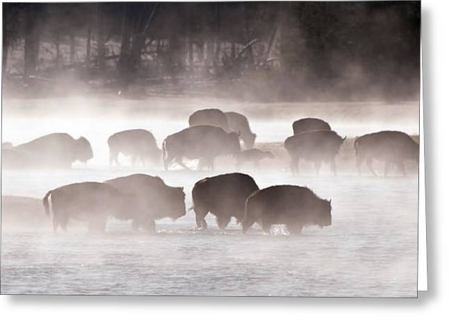 Early Morning Crossing Greeting Card by CR  Courson