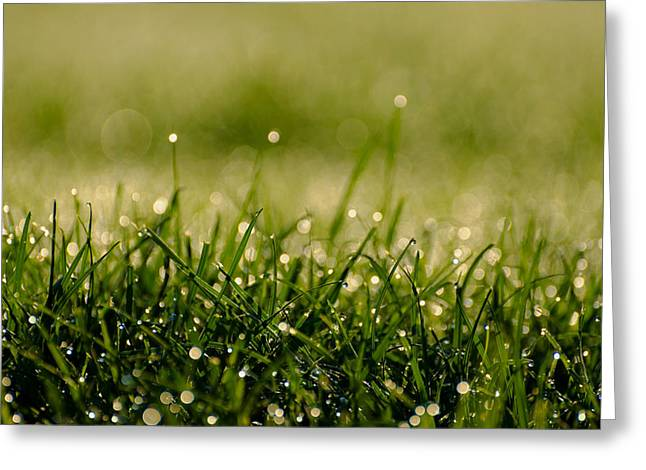 Ground Level Greeting Cards - Early Morning Dew Greeting Card by Mountain Dreams