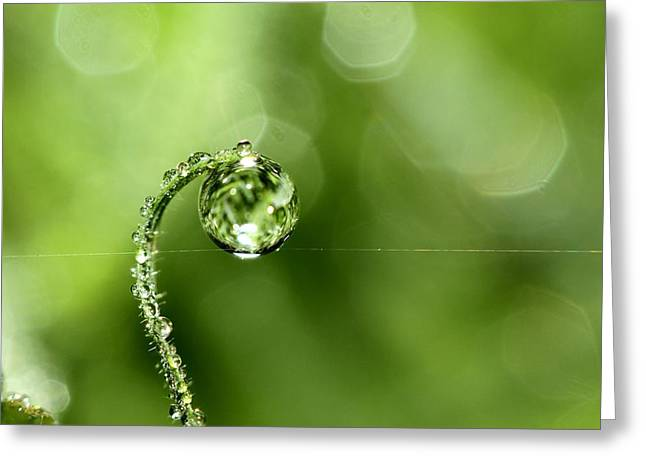 Sharon Johnstone Greeting Cards - Early Morning Dew Greeting Card by Sharon Johnstone