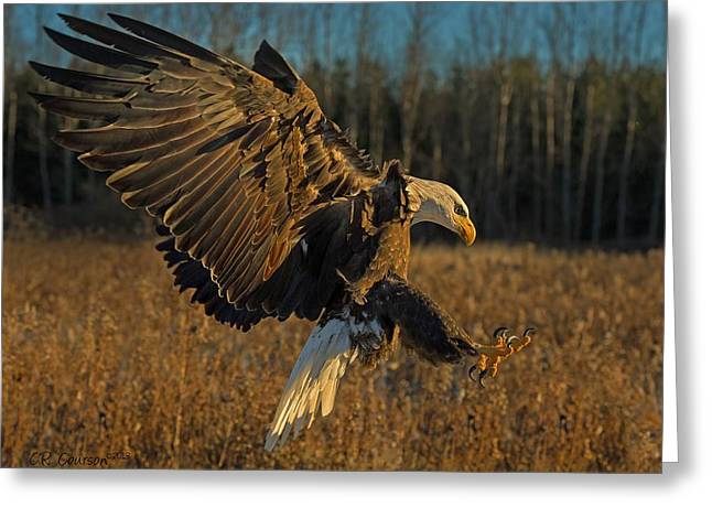 Courson Greeting Cards - Early Morning Eagle Greeting Card by CR  Courson