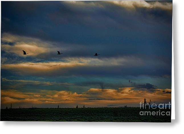 Trumpeter Silhouette Greeting Cards - Early Morning Flight Greeting Card by Rich Priest