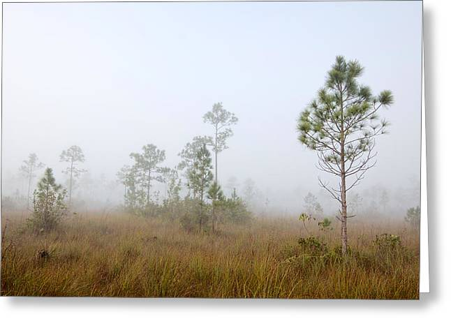 Biosphere Reserve Greeting Cards - Early morning fog Landscape-1 Greeting Card by Rudy Umans