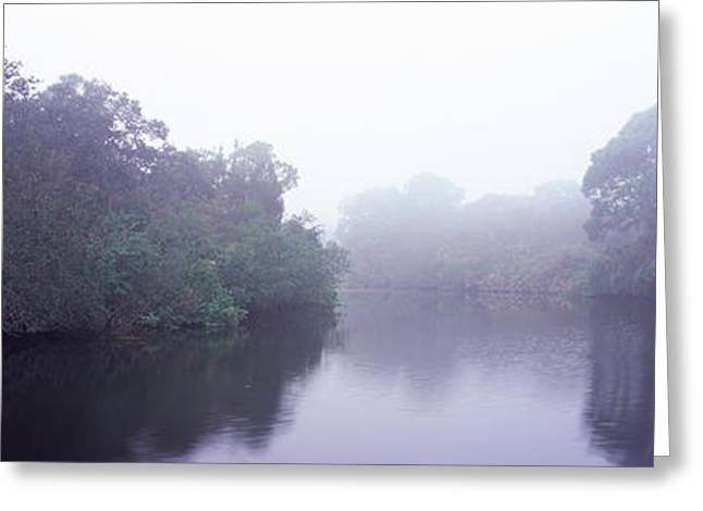Oscar Scherer State Park Greeting Cards - Early Morning Fog On A Creek, South Greeting Card by Panoramic Images