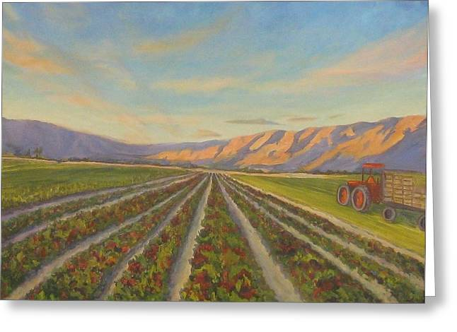 Lettuce Greeting Cards - Early Morning Harvest Greeting Card by Maria Hunt