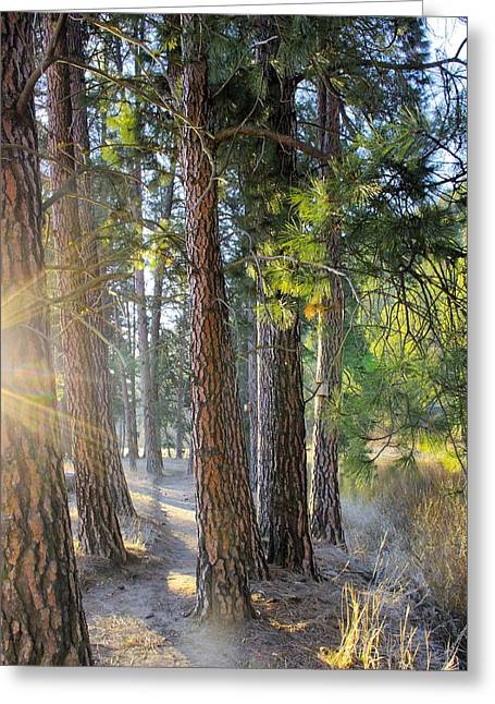Early Morning Hike Greeting Card by John  Greaves