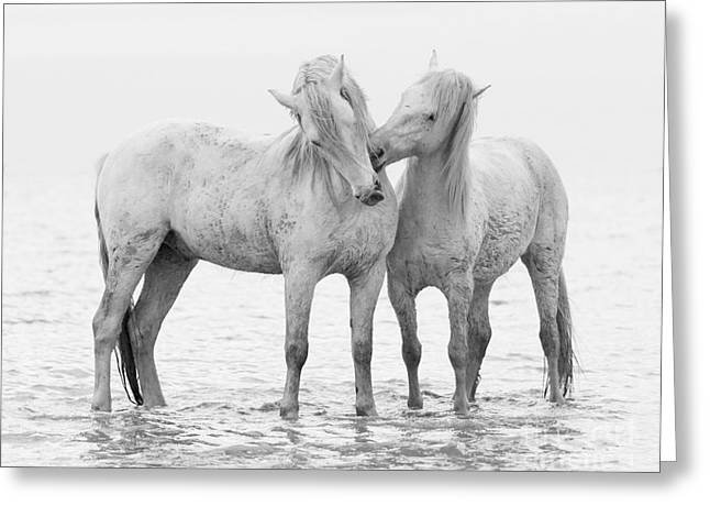 Water Play Greeting Cards - Early Morning Horse Play Greeting Card by Carol Walker