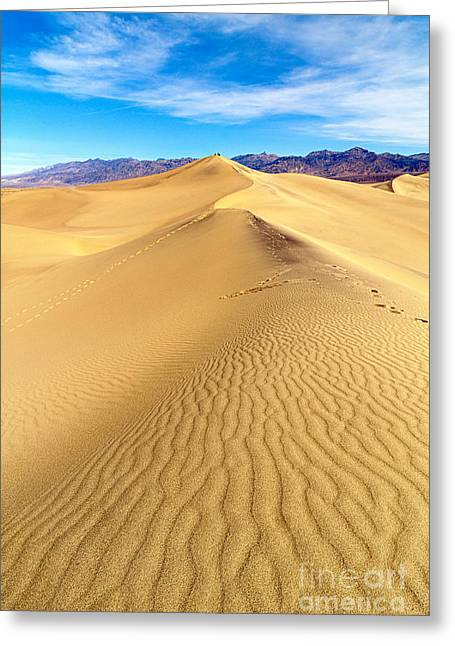 Large Scale Greeting Cards - Early morning in the Mesquite Sand Dunes adjacent to Stovepipe Wells in Death Valley National Park Greeting Card by Jamie Pham