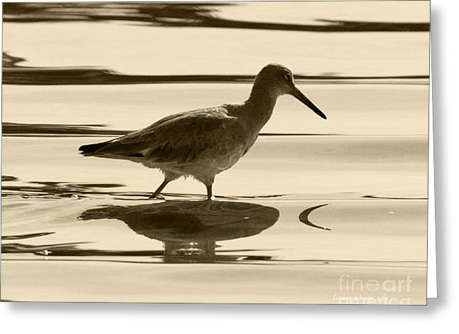 Recently Sold -  - Ocean. Reflection Greeting Cards - Early Morning in the Moss Landing Harbor Picture of a Willet Greeting Card by Artist and Photographer Laura Wrede
