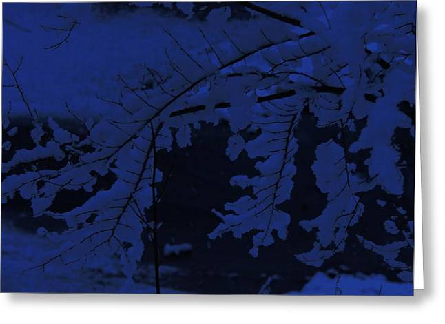 Colbalt Blue Greeting Cards - Early Morning Light Greeting Card by Elizabeth Sullivan