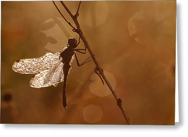 Meadowhawk Greeting Cards - Early Morning Magic Greeting Card by Roeselien Raimond