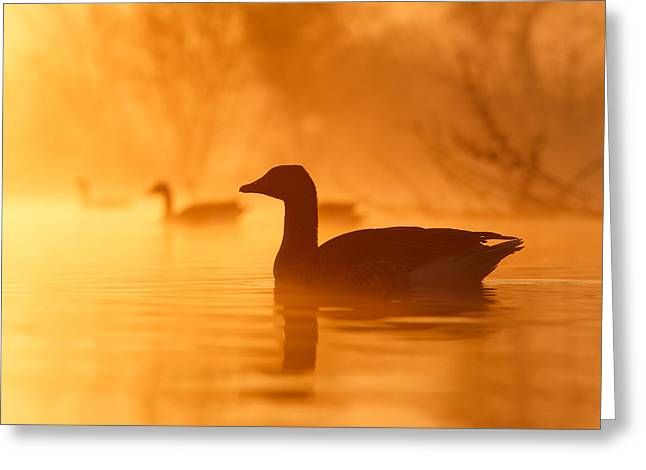 Early Morning Mood Greeting Card by Roeselien Raimond