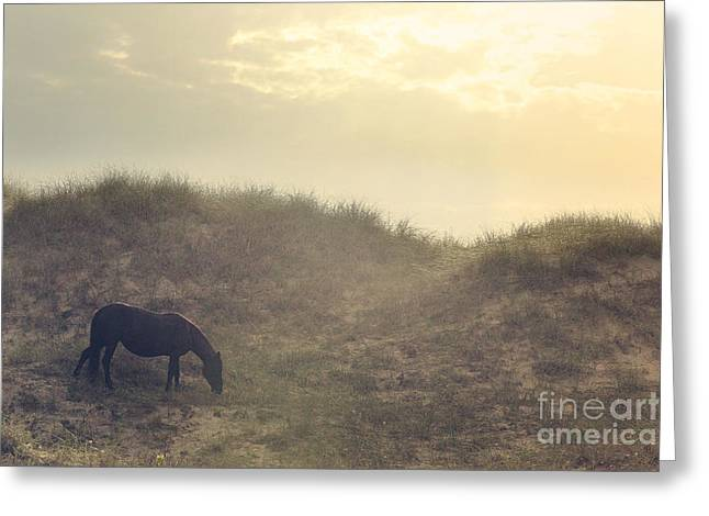Equine Photo Greeting Cards - Early Morning Munch Greeting Card by Lyndsey Warren