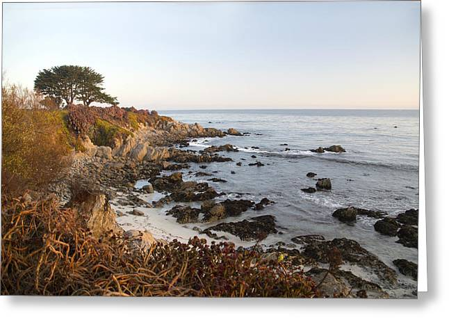 Sunrise Over California Greeting Cards - Early Morning Pacific Grove California Greeting Card by Barbara Snyder