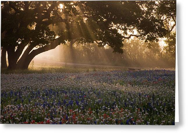 Foggy Day Greeting Cards - Early Morning Rays Greeting Card by Eggers   Photography