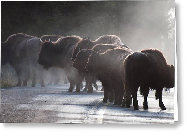 Bison Photos Greeting Cards - Early Morning Road Bison Greeting Card by Bruce Gourley