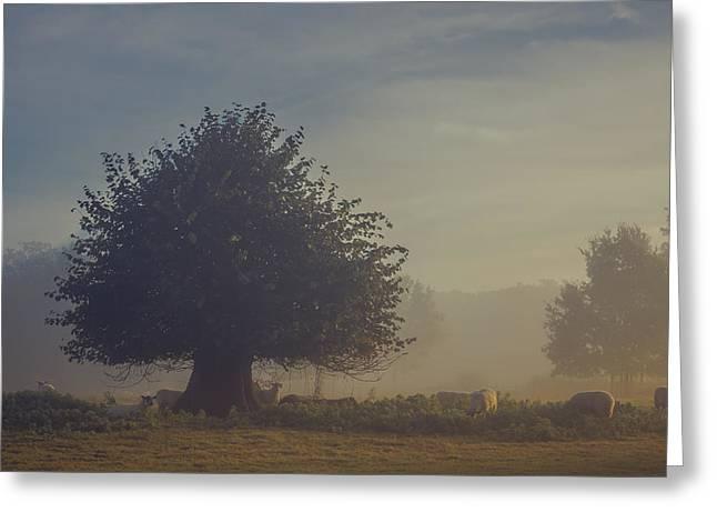 Early Morning Sheep Meet Greeting Card by Chris Fletcher