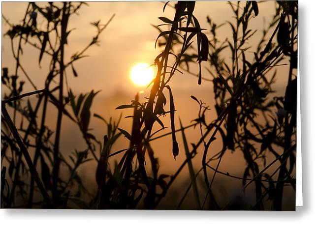 Early Morning Sun Greeting Cards - Early Morning Sun Greeting Card by Bill Cannon