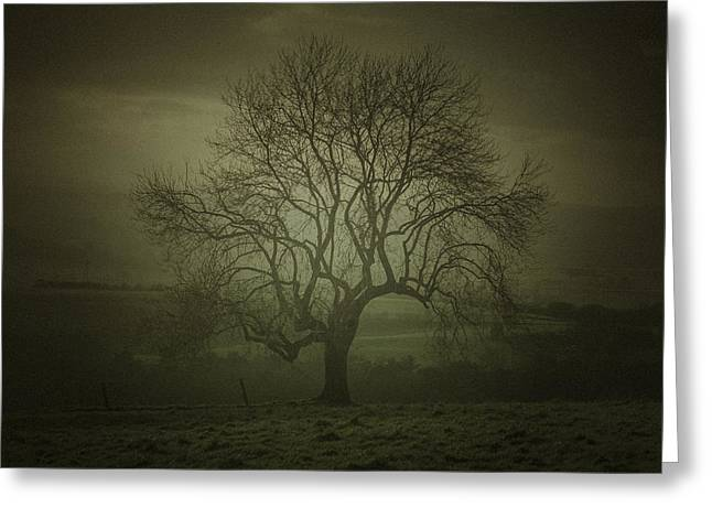 Tree Art Greeting Cards - Early morning tree art Greeting Card by Chris Fletcher