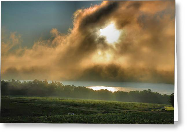 Vineyard Prints Greeting Cards - Early Morning Vineyard Greeting Card by Steven Ainsworth