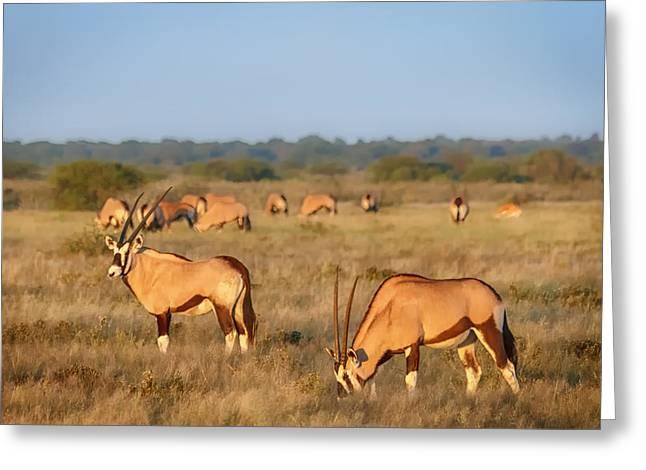 Gemsbok (oryx Gazella) Greeting Cards - Early Oryx Morning Greeting Card by Sylvia J Zarco