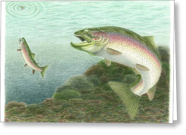 Rainbow Trout Drawings Greeting Cards - Early Risers Greeting Card by Daniel Lindvig