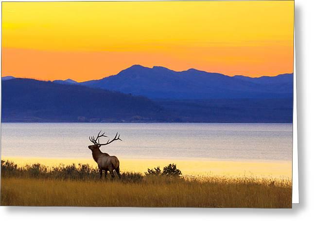 Elk Greeting Cards - Early Singer Greeting Card by Kadek Susanto