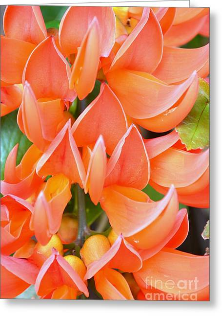 Jade Vine Greeting Cards - Early Spring Jade Greeting Card by Mary Deal