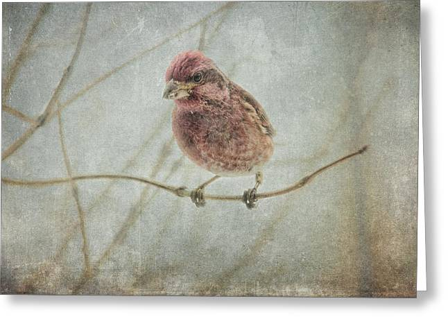 Early Spring Visitor Greeting Card by Susan Capuano