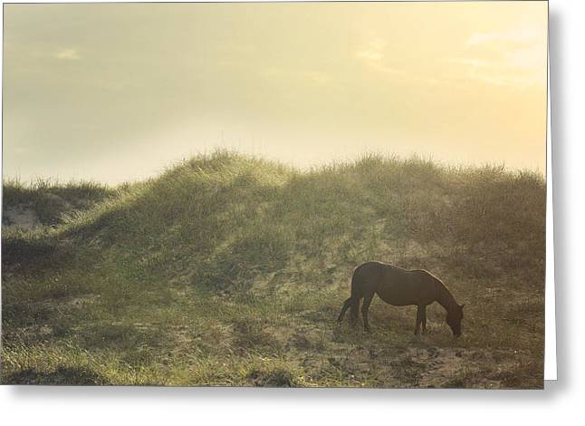 Equine Photo Greeting Cards - Early Surise Dune Graze Greeting Card by Lyndsey Warren