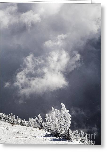 Bridger Teton Greeting Cards - Early Winter Storm Greeting Card by Mike Cavaroc
